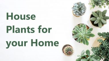 types of houseplant